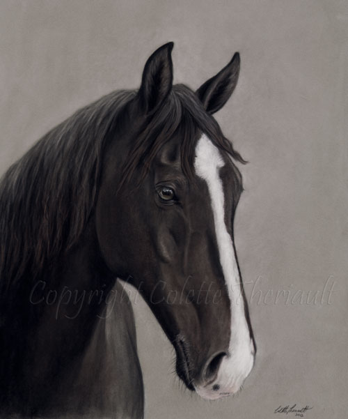 Tennessee Walking Horse Portrait in Pastel by Artist Colette Theriault