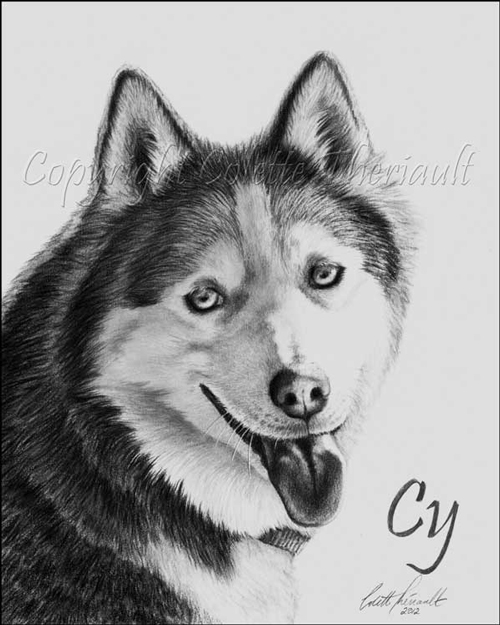 Siberian Husky Portrait by Pet Artist Colette Theriault