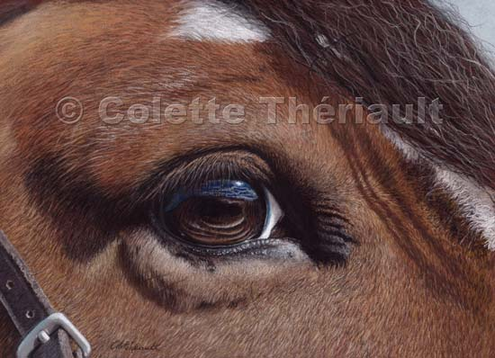 horse s eye reflection pastel painting horse pony equine animal
