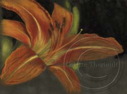 step 2 daylily flower painting