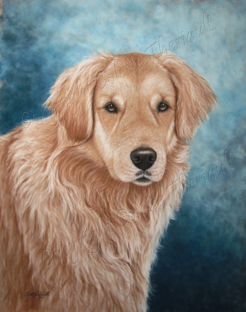 commission Portrait of Golden Retriever Painting in pastel