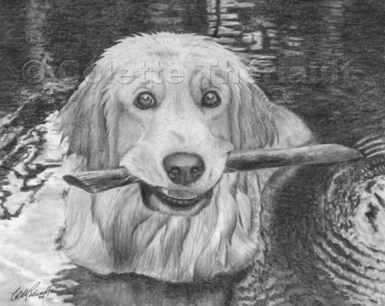 Golden retriever dog drawing pet portraits