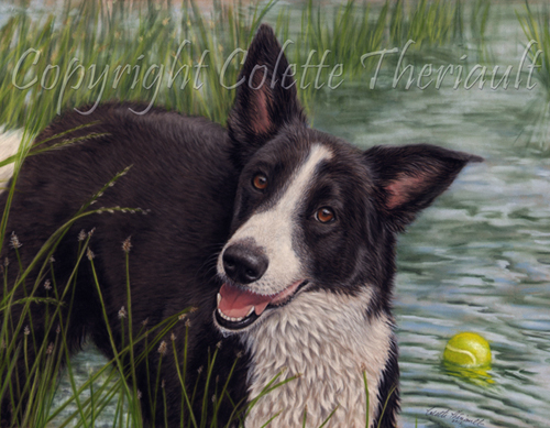 border collie portrait in pastel painting