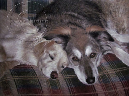 Mix breed dog portrait painting