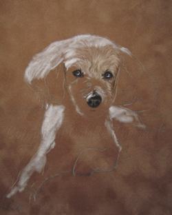 Maltese mix portrait step 1