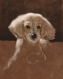 Maltese mix portrait step 2 on the easel