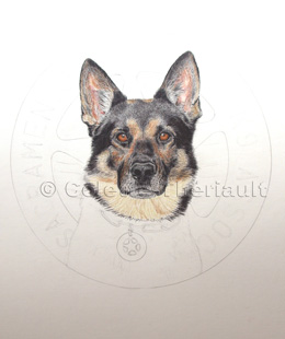 Police dog portrait work in progress