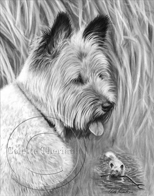 Skye Terrier Mix Drawing in Pencil