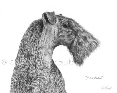 Kerry Blue Terrier Portrait