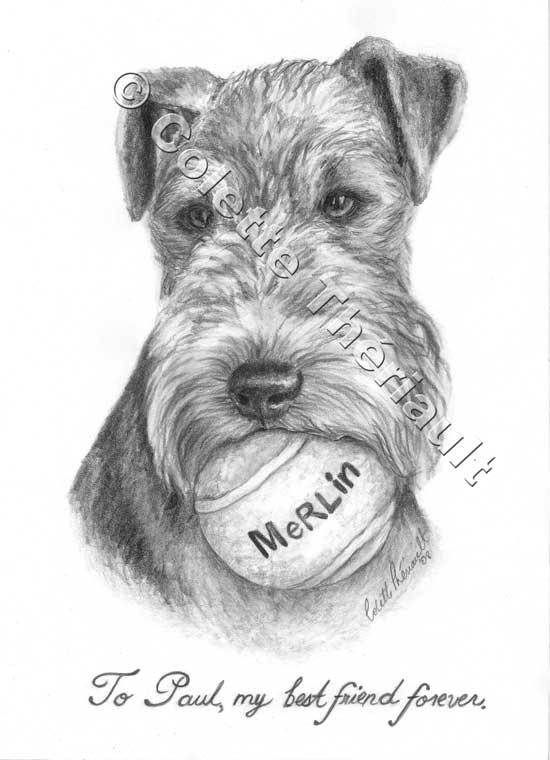 Welsh Terrier Pencil  Drawing-Pet Portraits