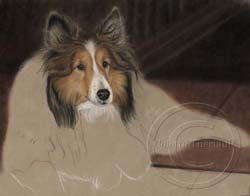 Step 5-Sheltie portrait