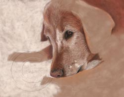 step two dog pastel painting