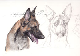 step 5 of police k9 artwork