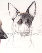 step 6 of police k9 artwork