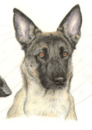 step 9 of police k9 artwork