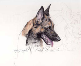step 4 of police k9 artwork