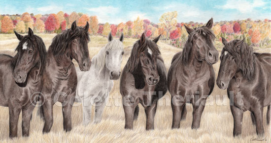 Group of Percheron work horse-Pet Portrait Drawing