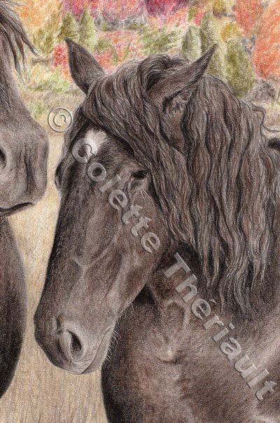 Percheron draft horse-Pet Portrait Drawing