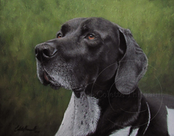 pointer pastel painting