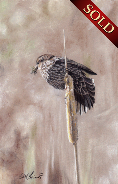 Red-winged blackbird painting pastel