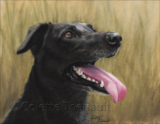 Black Labrador mix Pastel Painting