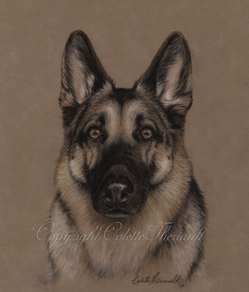 German Shepherd Dog Pastel Painting