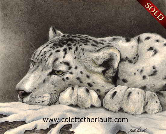 asian snow leopard drawing in pencil and charcoal