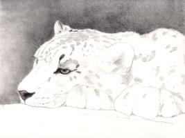 Snow leopard work in progress
