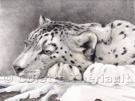 Snow leopard work in progress