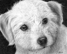 final portrait of poodle terrier mix