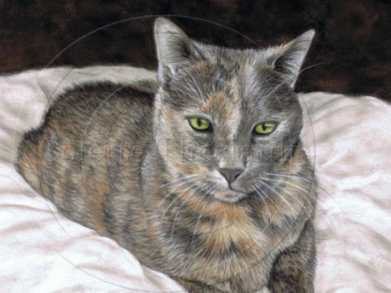 Tortoiseshell (dilute) cat painting by Colette Theriault