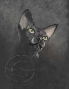 Sphynx cat portrait step 1