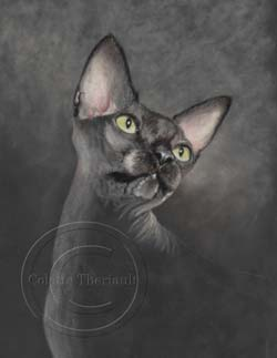 Sphynx cat portrait step 2