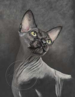 Sphynx cat portrait step 3