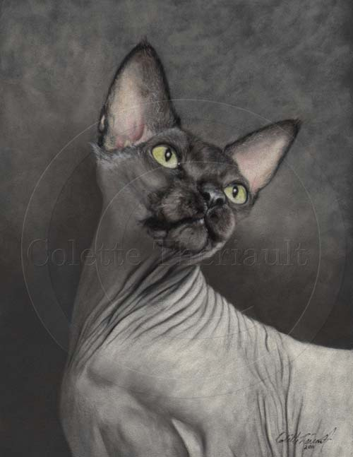 Sphinx Hairless Cat Painting in Pastel