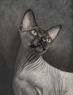 Sphynx cat portrait step 4