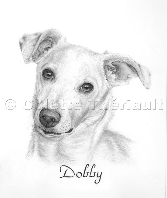 Jack Russell Terrier mix  Drawing-Pet Portraits