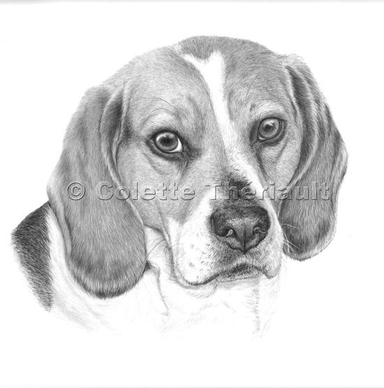Beagle Dog Drawing