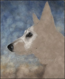 step 2 portrait of white shepherd