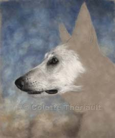 step 3 portrait of white shepherd