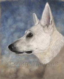 Step 4 white shepherd painting in progress
