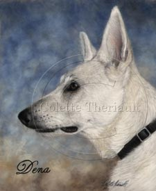 white german shepherd painting portrait