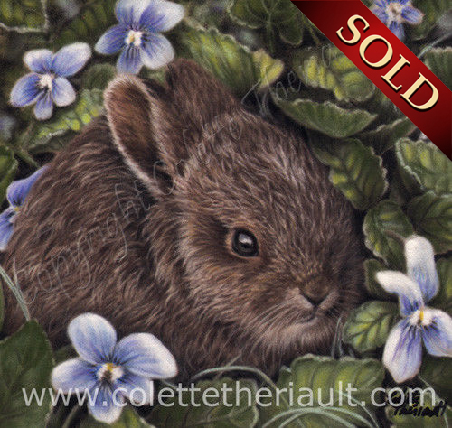 baby hare pastel painting wildlife art