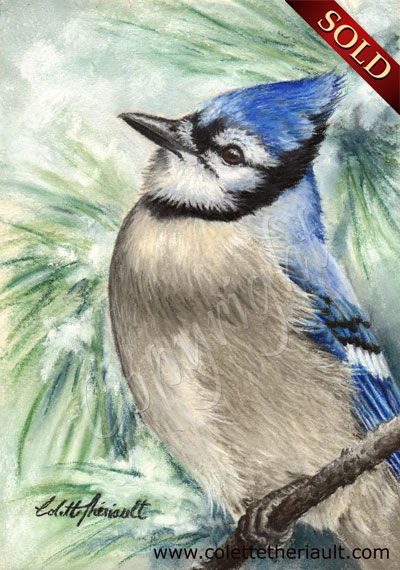 Blue Jay Painting in Pastel by Canadian Wildilfe Artist Colette Theriault