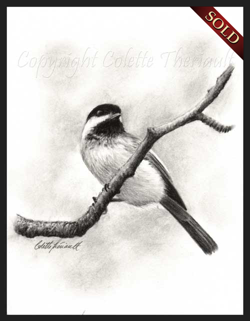 black capped chickadee charcoal drawingBlack Capped Chickadee Drawing
