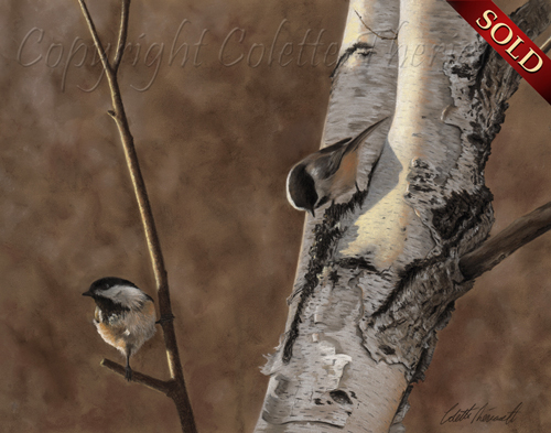 Black Capped Chickadee painting in pastel-Avian Art