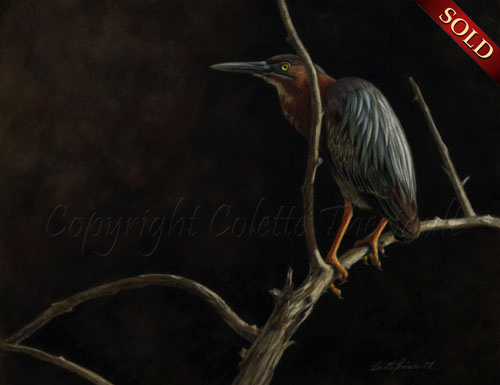 green heron painting in pastel by Colette Theriault