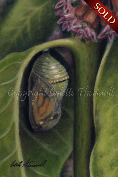 Monarch Chrysalis on Milkweed plant painting in pastel by Colette Theriault