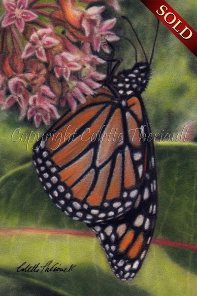 Monarch butterfly on common milkweed floral painting by Colette Theriault