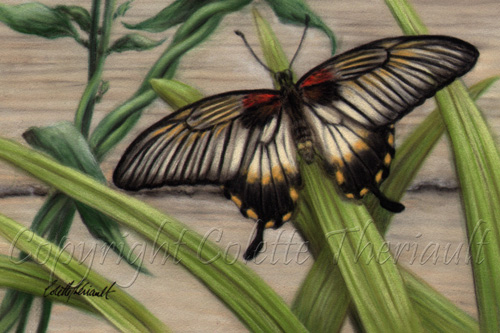 Butterfly Artwork Gallery